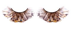 Черно-коричневые ресницы-перья
